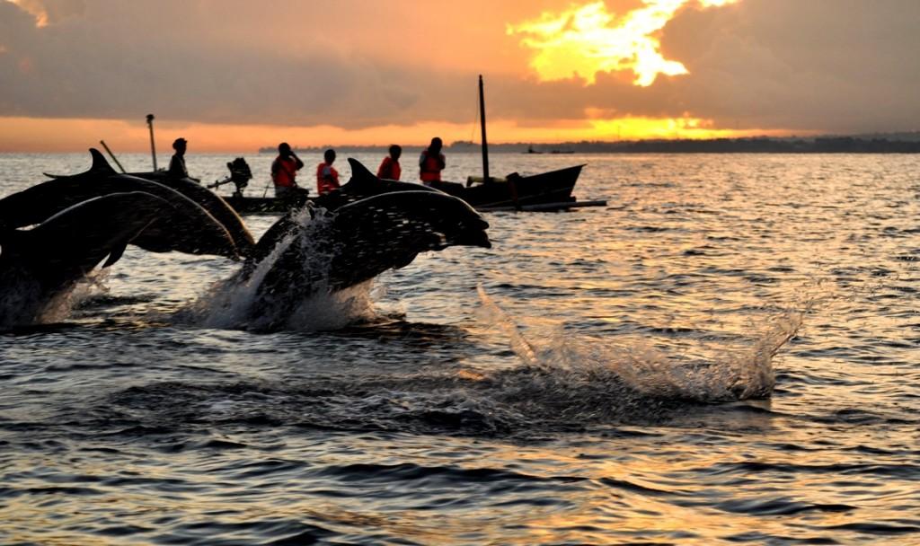 dolphin-lovina-bali