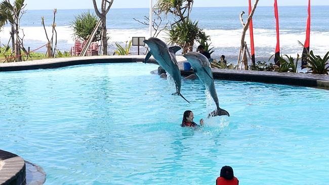 wake adventure dolphin