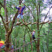 Bali tree top 2