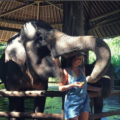 Liburan Tahun Baru di Bali Safari & Marine