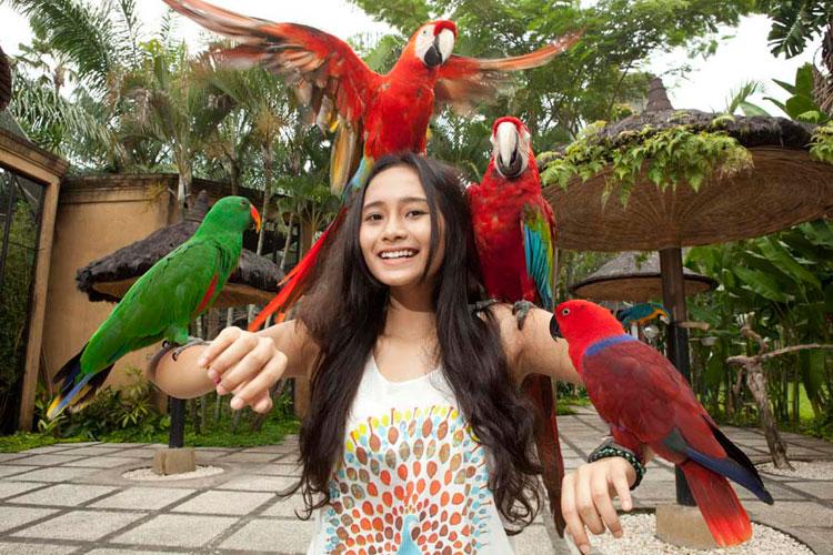 Bali Bird Park liburan bali 1